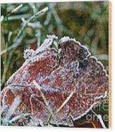 Frosted Wood Print