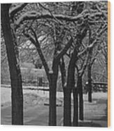 Frosted Trees Wood Print by Artist Orange