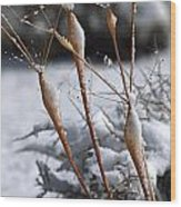 Frosted Trumpets Wood Print