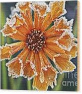 Frosty Flower Wood Print