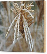 Frosty Fountain Grass Wood Print