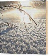 Frosty Ice At Sunrise Wood Print