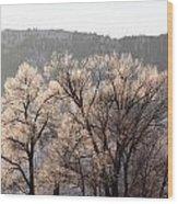 Frosty Tree Wood Print