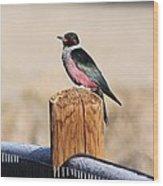 Frosty Woodpecker Wood Print