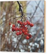 Frozen Mountain Ash Berries Wood Print