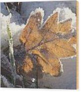 Frozen Oak Leaf Wood Print