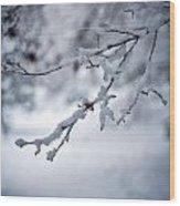 Frozen Path Wood Print