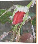 Frozen Rosebud Wood Print