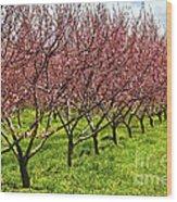 Fruit Orchard Wood Print by Elena Elisseeva