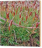 Fruiting Moss - Red And Green Tableau Wood Print