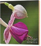 Fuchsia Flower Wood Print