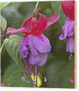 Fuchsia Fuchsia Sp Red And Blue Variety Wood Print