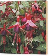 Fuchsia 'mrs Popple' Wood Print