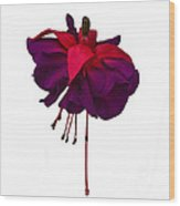 Fuchsia On White Wood Print by Dawn OConnor