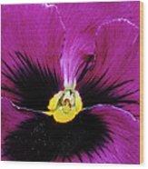 Fuchsia Pansy Wood Print
