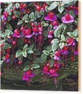 Fuchsia 'swanley Gem' Wood Print