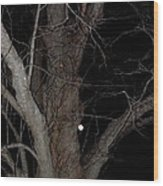 Full Moon Beyond The Old Tree Wood Print