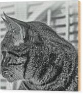 Full Profile Of The Cat - Black-and-white Wood Print