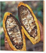 Fungal Infection Of Cacao Wood Print by Science Source