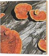 Fungi Wood Print