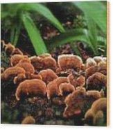 Fungus Among Us Wood Print