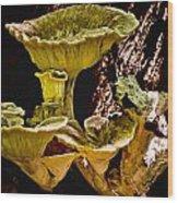 Fungus Among Us Wood Print by Michael Putnam
