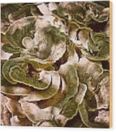 Fungus Swirl Wood Print by Michael Putnam