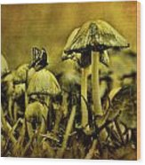 Fungus World Wood Print by Chris Lord