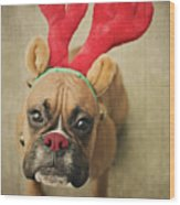 Funny Boxer Puppy Wood Print by Jody Trappe Photography