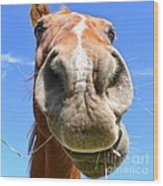 Funny Brown Horse Face Wood Print by Jennie Marie Schell