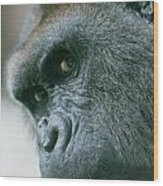 Funny Gorilla Wood Print