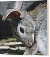 Funny Rabbit Wood Print