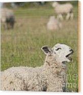 Funny Sheep Wood Print