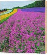 Furano Lavender Season Wood Print