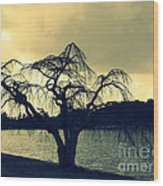 Furman Lake Tree Wood Print