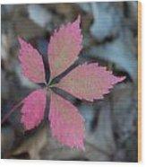 Fushia Leaf 2 Wood Print