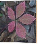 Fushia Leaf Wood Print
