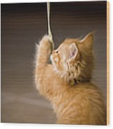 Fuzzy Baby Kitten Playing And Pulling On A Cord Wood Print