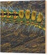 Fuzzy Caterpillar Wood Print