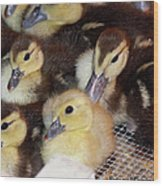 Fuzzy Ducklings Wood Print