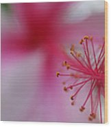 Fuzzy Hibiscus Wood Print