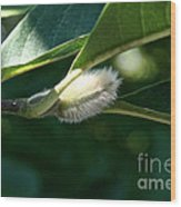 Fuzzy Magnolia Wood Print