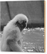 Fuzzy Monkey 002 Wood Print