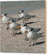 Gaggle Of Gulls Wood Print