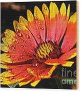 Gaillardia Flower Wood Print