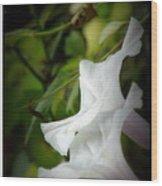 Gaily Wood Print