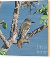 Galapagos Flycatcher Wood Print