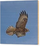 Galapagos Hawk Flying Wood Print