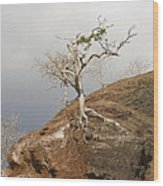 Galapagos Tree Wood Print