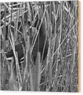 Gallinule In The Grass Wood Print